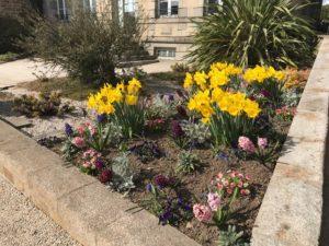 Massif de fleurs à Brécey