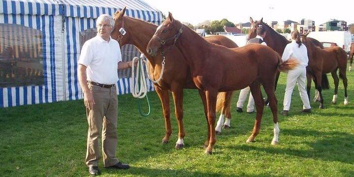 Totem, un cheval de Brécey aux JO de Tokyo
